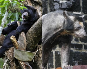 Sugar Shout Out: Meet Dolores the Hairless Bear