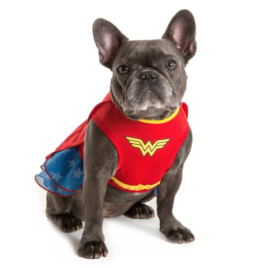 The Most Popular Dog Costumes