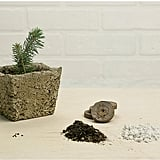 MakersKit Grow Your Own Evergreen Tree ($18)