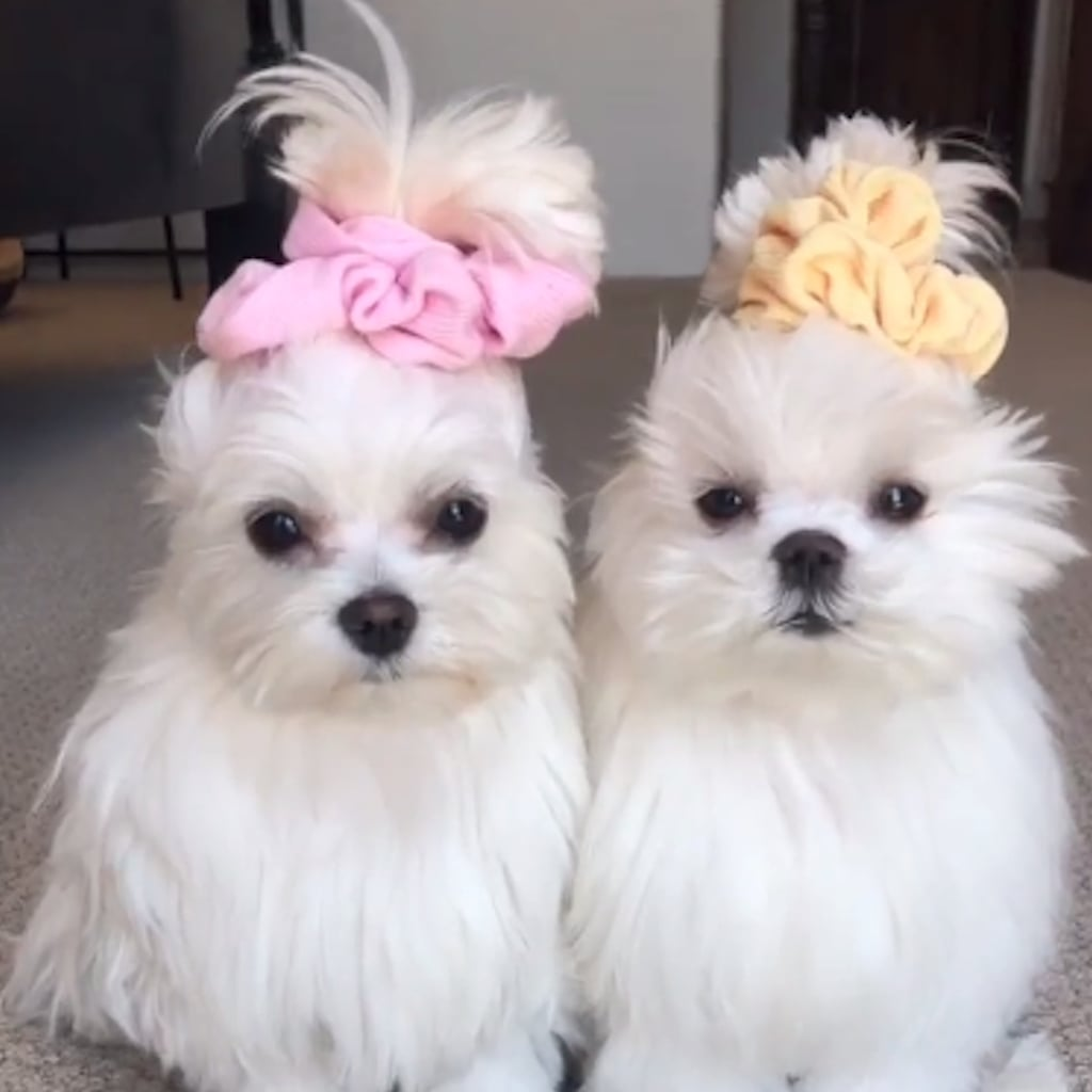 Funny Pet Videos On Tiktok Popsugar Pets