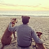 Lauren Conrad and William Tell took their dogs to the beach.