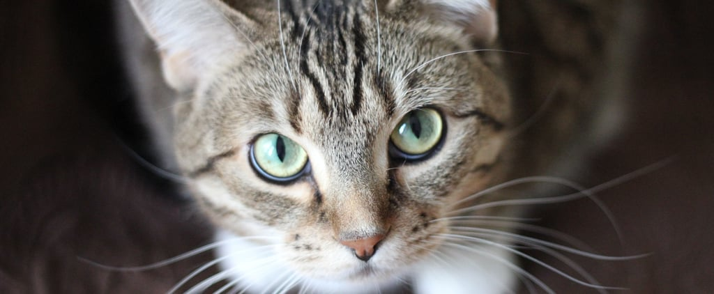 Why Do My Cat's Eyes Glow in Photographs?
