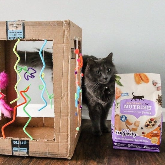 Fun and Easy DIY Cat Toys to Keep Cats Busy