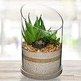 Modern Glass and Artificial Succulent Plant Centerpiece Display