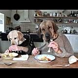 يتناول الكائنان المكسوّان بالفرو هذين الطعام معاً على مائدة العشاء.