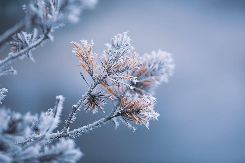 15+ Beautiful Photos of Winter