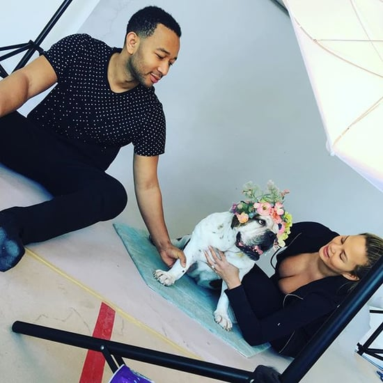Chrissy Teigen's Dogs in Photo Shoot For Nursery