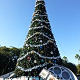 Every holiday season, Walt Disney World resort decorates the parks with 1,500 Christmas trees.