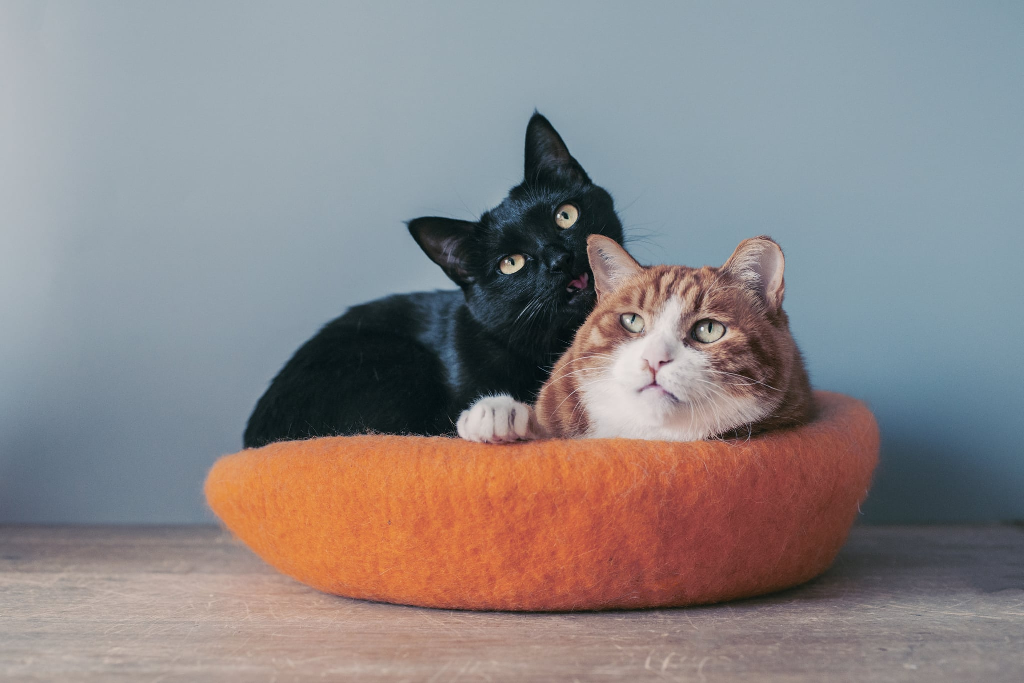 Two cats sit in a cat's nest, obviously very crowed.