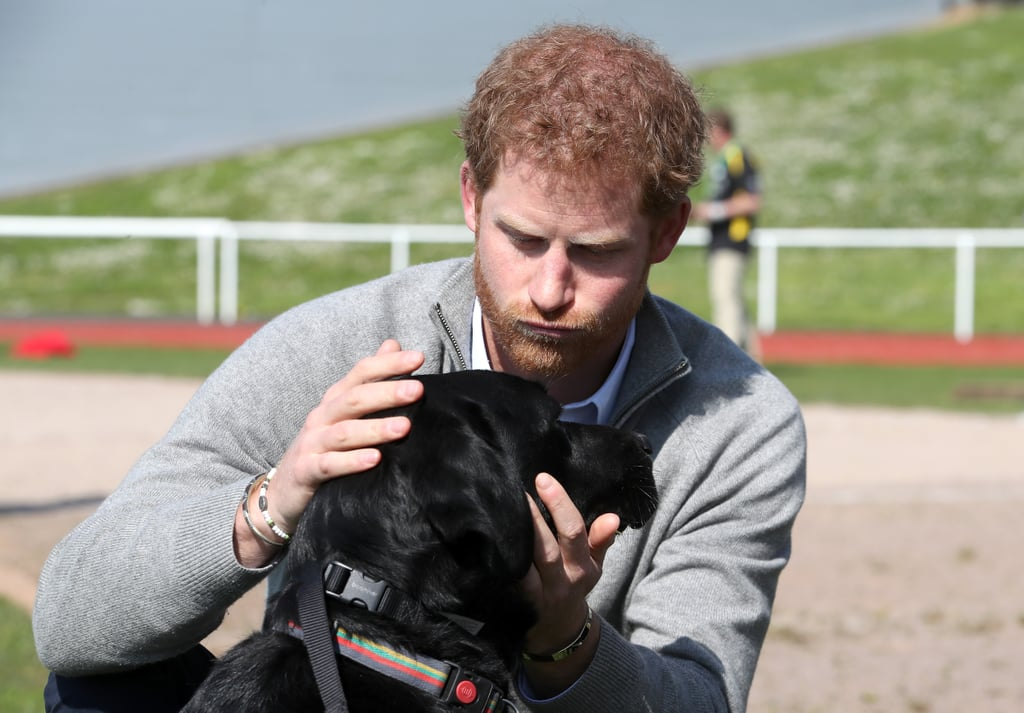 We all know that Prince Harry is great with kids, but have you ever seen him with a cute puppy? Sure, children bring out his fun-uncle side, but in my honest opinion, nothing is cuter than an attractive man with a dog. Over the years, the famous royal has shared some over-the-top adorable moments with everything from pet puppies to sweet service dogs. Whether he's petting them on the head or giving them a sweet kiss, we definitely get weak in the knees anytime he shows off his puppy love.       Related:                                                                                                           34 Pictures That Prove the Royal Family Is Full of Animal-Lovers