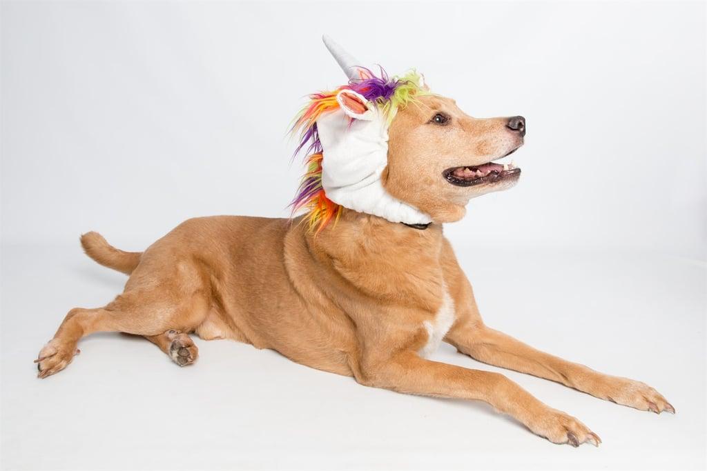 Big Dog Unicorn Costume