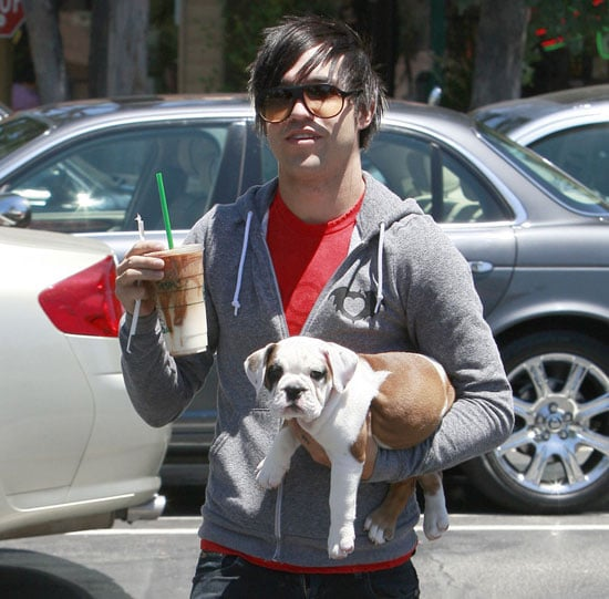 Pete Wentz and New Bulldog Pup, Rigby