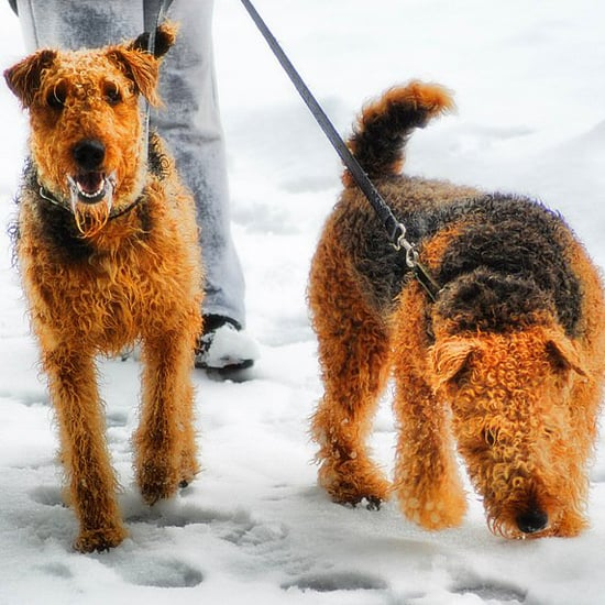 Things to Do With Dogs in Winter
