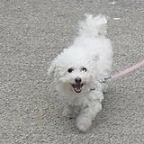 Bijou on the Move