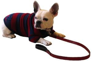 New Product Alert! Phillip Lim Dog Sweaters