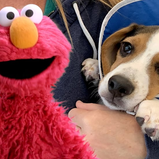 The Dodo Sesame Street Video Series on Pet Adoption