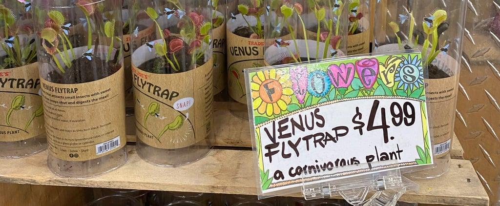 Trader Joe's Is Selling Venus Flytraps For $5!