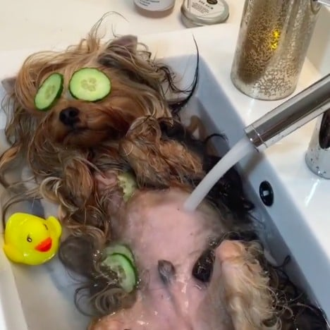 Dog Spa Relaxation Video