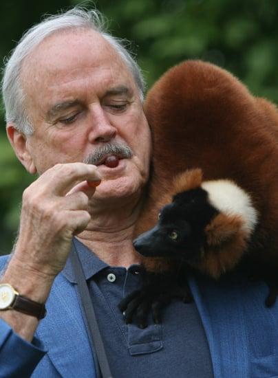 Creature Feature: Lemurs
