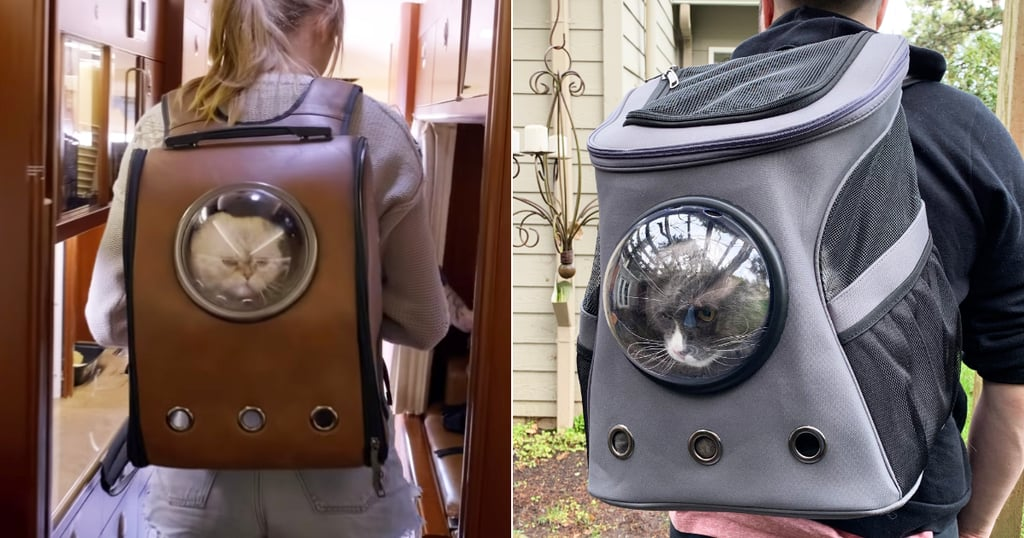 Taylor Swift's Cat Backpack Review With Pictures