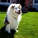 HR Coordinator Kristen Cunningham took a pic of her fluffy Australian Shepherd, Bailey, hanging in the grass.