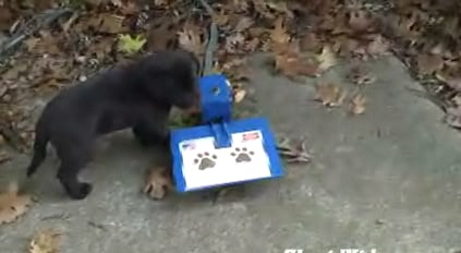 Puppy Uses Puppy Fountain