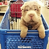 She loves shopping and likes riding in the cart like a boss.