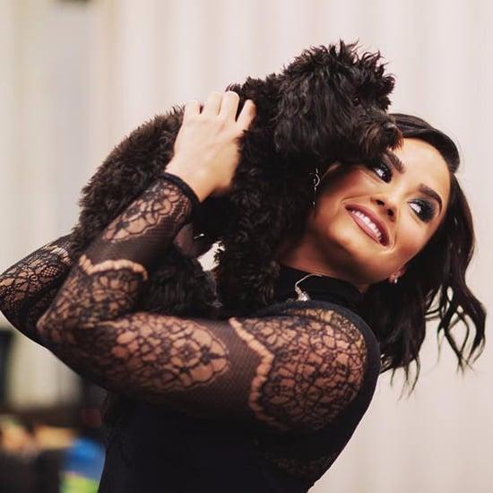 Demi Lovato's Dogs