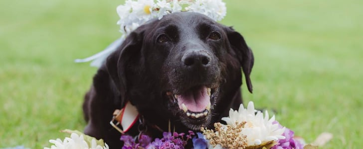 Senior Dog Joins His Human's Wedding Before Passing Away a Few Days Later