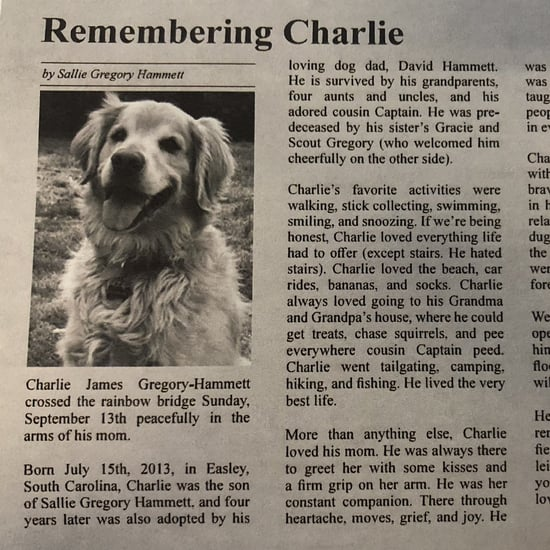Dog Mom Writes Obituary For Golden Retriever, Charlie