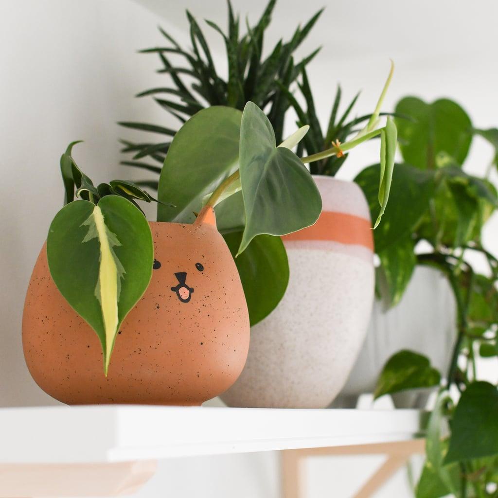 Funny Plant Name Ideas