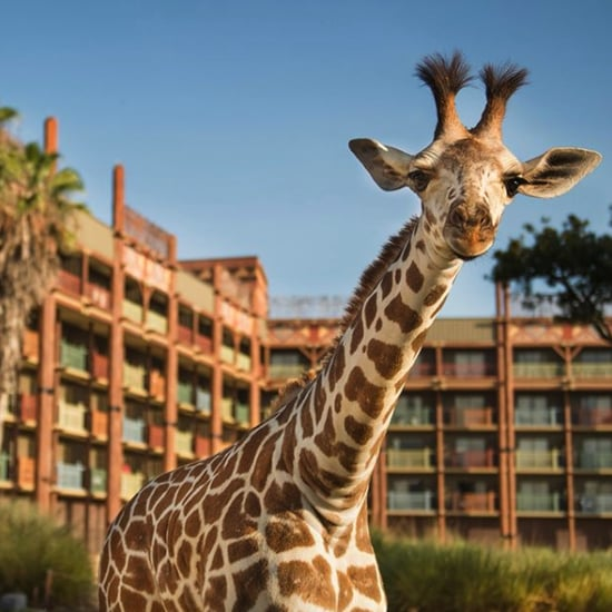 Fun Facts About Disney's Animal Kingdom Lodge