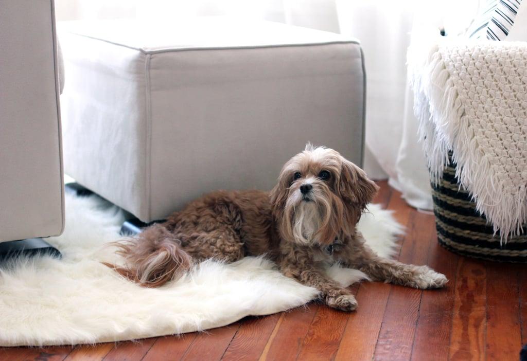 Carpet Pet Stains