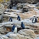 San Diego Zoo Virtual Tours