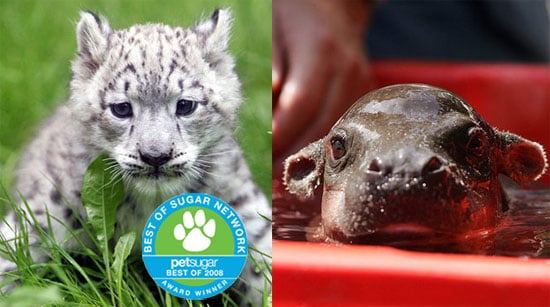 The Results Are In: Cutest New Zoo Baby