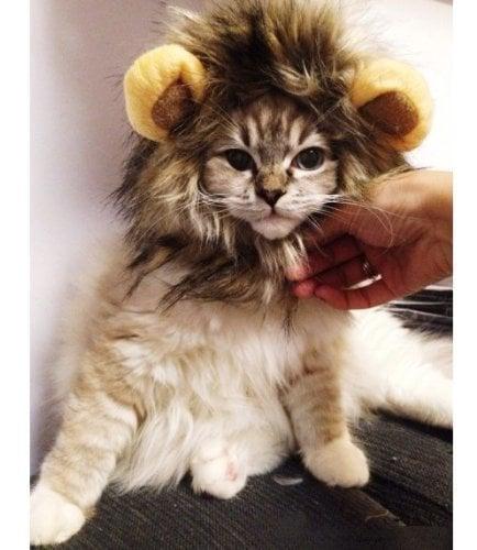 Lion Mane Costume