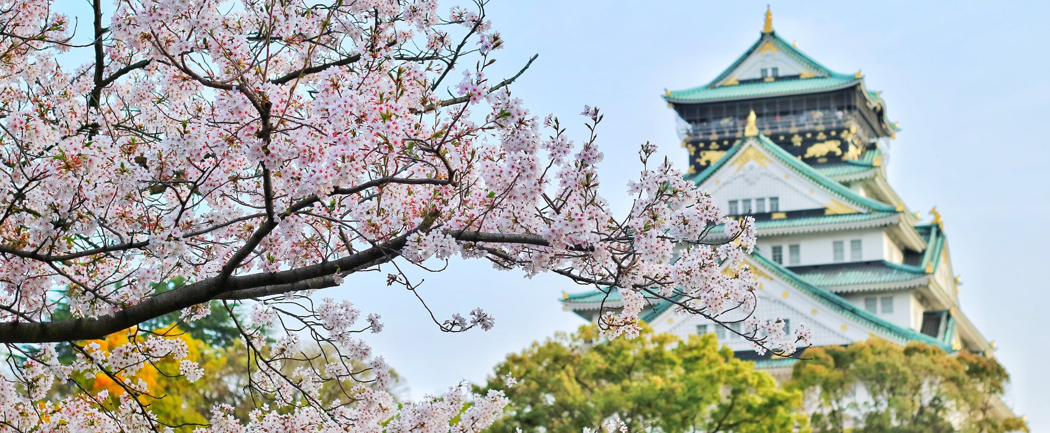 Pretty Photos of Cherry Blossoms