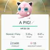 """Jigglypuff aka """"A PIG!"""""""