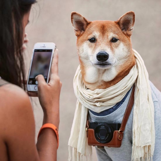 How to Make Your Dog Famous on Instagram