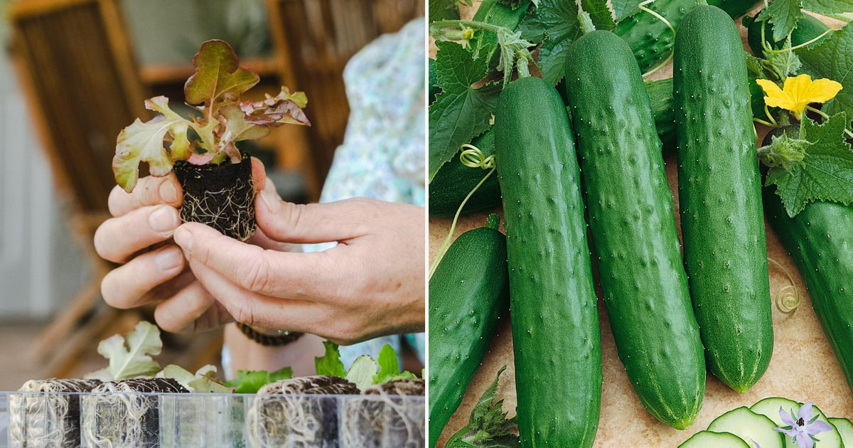 Where to Order Vegetable Plants Online For Delivery ...
