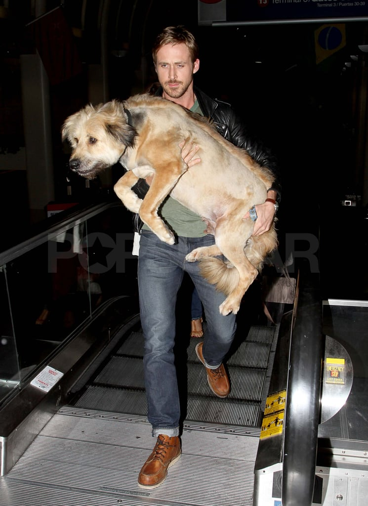 Ryan Gosling had his dog, George, in his arms at LAX last night. He headed out of town with his furry best friend and his assistant after attending the premiere of Drive during the LA Film Festival yesterday. Ryan's costar Christina Hendricks was on hand for the event, though his other leading lady, Carey Mulligan, couldn't make the West Coast trip since she's busy performing in the off-Broadway play Through a Glass Darkly in NYC. Ryan also handled press duties without Carey at the Cannes Film Festival, but he'll soon switch gears to promote his other project, Crazy, Stupid, Love. He stars in the romantic comedy with Emma Stone and Steve Carell, and the threesome took the stage at the MTV Movie Awards to kick off promotions for the movie ahead of its July release.