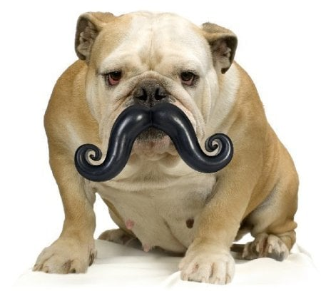 Moody Pet Humunga Stache Dog Toy
