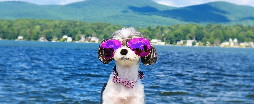 Tinkerbelle the Dog Takes Over the Berkshires For Vacation
