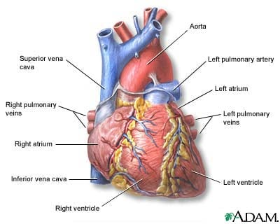 Michael Jackson and the Difference Between Sudden Cardiac Arrest and Heart Attack