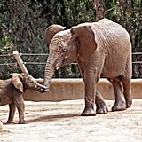 Baby Elephant Pictures