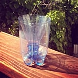 Upcycle a plastic bottle for a bug trap.