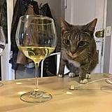 لم يعد بوسعكِ تناول المشروبات وحدك بعد الآن