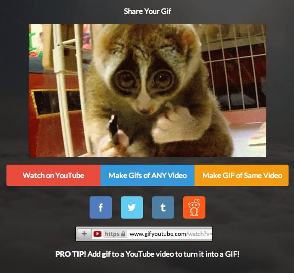 Copy the share URL and paste it in your browser to open the GIF in a new tab. Drag the GIF onto your desktop.