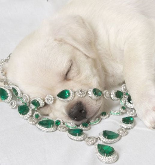 ASPCA and Chopard Team up for 11th Annual Bergh Ball with Diamond Paws