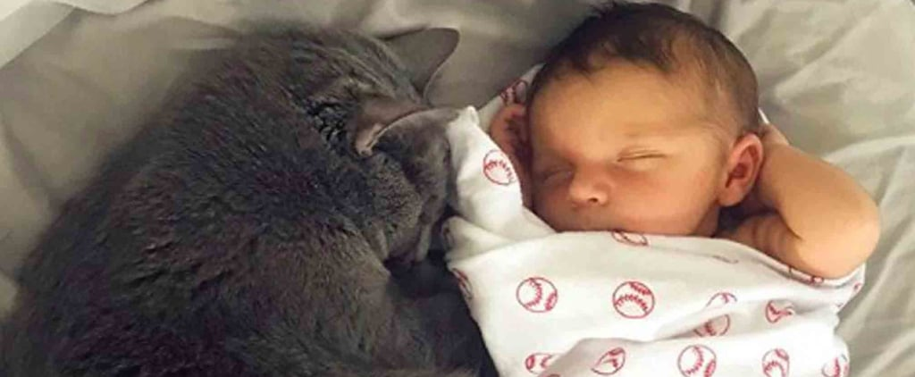 Photos of Babies and Cats